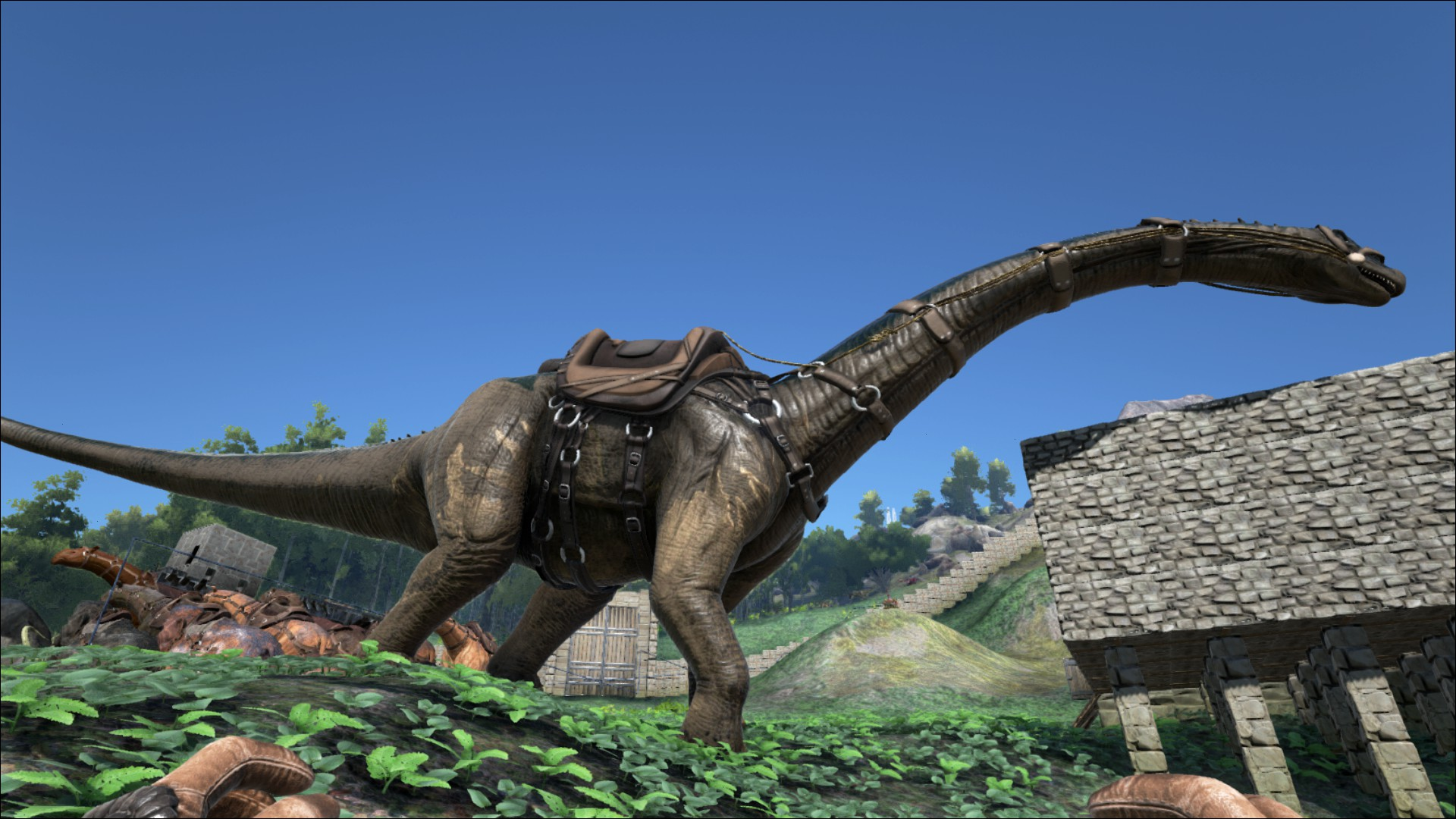 Bronto saddle brontosaurus sattel wiki ark survival evolved 11647 mal gelesen malvernweather Image collections