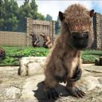 Ein Baby Megatherium