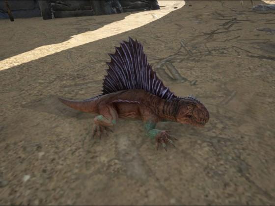 Dimetrodon Baby