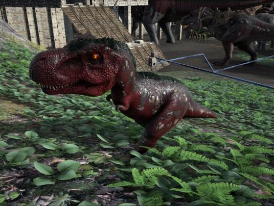 Handaufzucht von einem Rex ;-)
